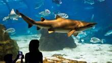 L'Aquàrium - Barcelona Aquarium